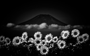nature, monochrome, Mount Fuji, flowers, Japan