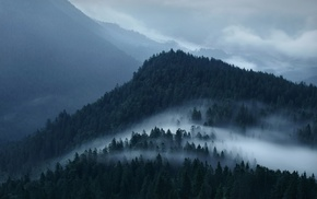 forest, landscape, nature, mist, clouds, mountain