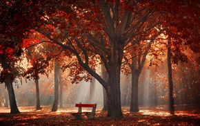 sun rays, mist, leaves, nature, bench, trees