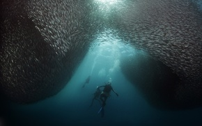 underwater, divers, shoal of fish, fish