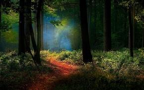 nature, mist, shrubs, landscape, forest, sunlight