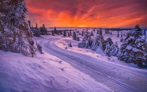 cold, sunrise, sky, nature, snow, forest