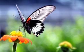 flowers, wings, macro, animals, closeup, nature