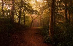 trees, dirt road, mist, forest, path, nature