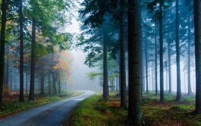 road, forest, nature, trees, grass, landscape