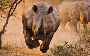 rhino, animals, savannah, desert, nature