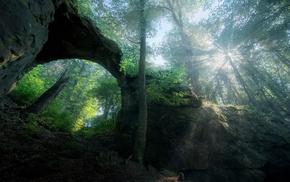 nature, forest, shrubs, trees, spring, landscape