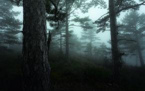 hill, sunrise, landscape, forest, nature, mist