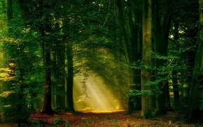 trees, forest, mist, path, landscape, nature