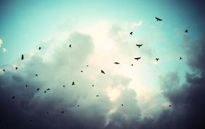 birds, sky, clouds