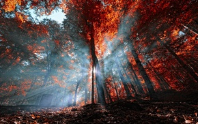 landscape, trees, red, Turkey, forest, mist