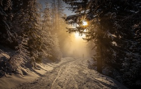 trees, snow, Austria, sunlight, landscape, winter
