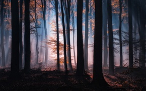 shadow, nature, fall, forest, leaves, sunrise