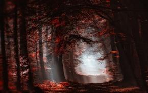 leaves, red, landscape, atmosphere, forest, mist