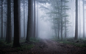 nature, sunrise, atmosphere, dirt road, landscape, path