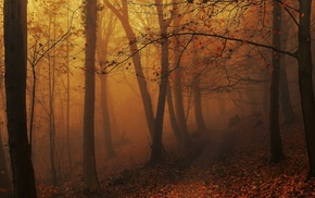 path, sunrise, amber, fall, atmosphere, trees