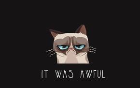 cat, Grumpy Cat