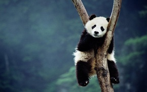 depth of field, sitting, forest, panda, trees