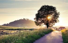 farm, house, trees, grass, landscape, sunlight