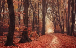 fall, trees, leaves, forest, atmosphere, nature