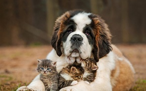 grass, animals, dog, baby animals, kittens, depth of field