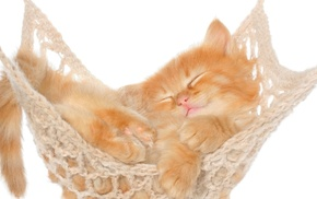white background, nature, baby animals, hammocks, animals, cat
