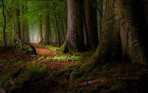 nature, mist, roots, landscape, leaves, trees