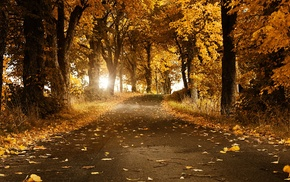 forest, fall, leaves, grass, trees, road