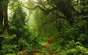 plants, path, lianas, trees, moss, ferns