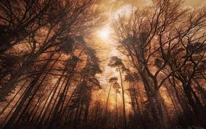 trees, nature, landscape, mist, shrubs, forest
