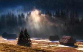 landscape, forest, sun rays, mist, sunrise, snow