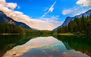 forest, trees, mountain, landscape, summer, nature