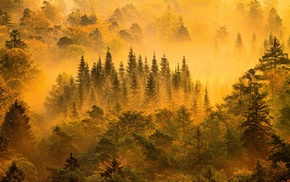 fall, yellow, forest, mountain, mist, trees