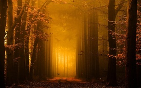 forest, fairy tale, path, sunrise, sunlight, fall