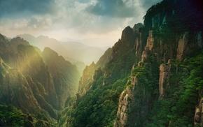 forest, mountain, mist, sunrise, China, canyon