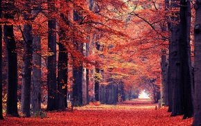 trees, leaves, landscape, path, nature, red