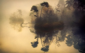water, birds, calm, shrubs, lake, landscape