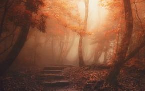 nature, mist, landscape, atmosphere, leaves, path