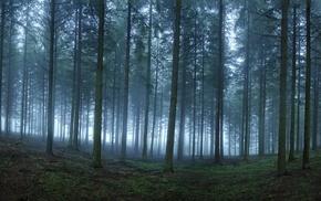 forest, morning, nature, landscape, trees, mist