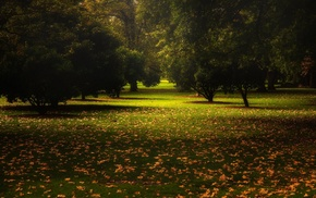 trees, fall, Australia, nature, grass, green