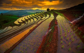 rice paddy, sunrise, mist, mountain, terraces, water