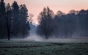 nature, morning, grass, mist, forest, landscape