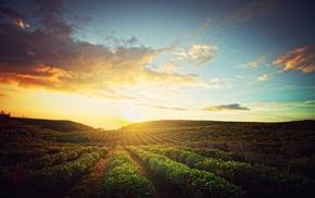 farm, sky, nature, sunrise, clouds, landscape