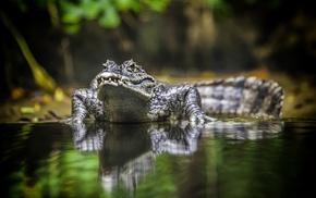 animals, water, reptile, jungles