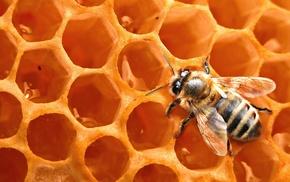 animals, bees, nature, honey