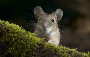 forest, nature, animals, rats