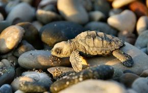 animals, turtle, nature, baby animals
