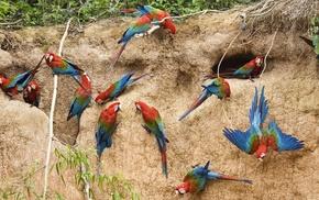 nature, parrot, birds, animals