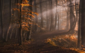 leaves, path, fall, forest, sun rays, trees