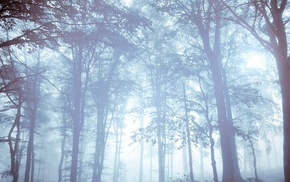 trees, forest, mist, nature, bright